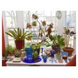 House Plants, Cobalt Blue Glassware, Vases & Planters