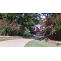 Full Contents Estate of Sally C. Rainwater