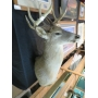 S.SALMI ONLINE AUCTIONS: DEER MOUNT, BEAUTIFUL FRAMED PRINTS, ANTIQUES AND MORE ONLINE AUCTION