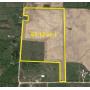October 26th (Tuesday) 61.12 Acres +/- Vacant Farmland, Mayville (Tuscola County)