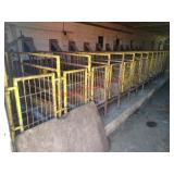 Yellow calf crates with bottle feeders, 13 stalls
